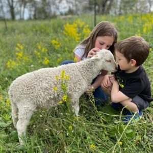 children with sheep