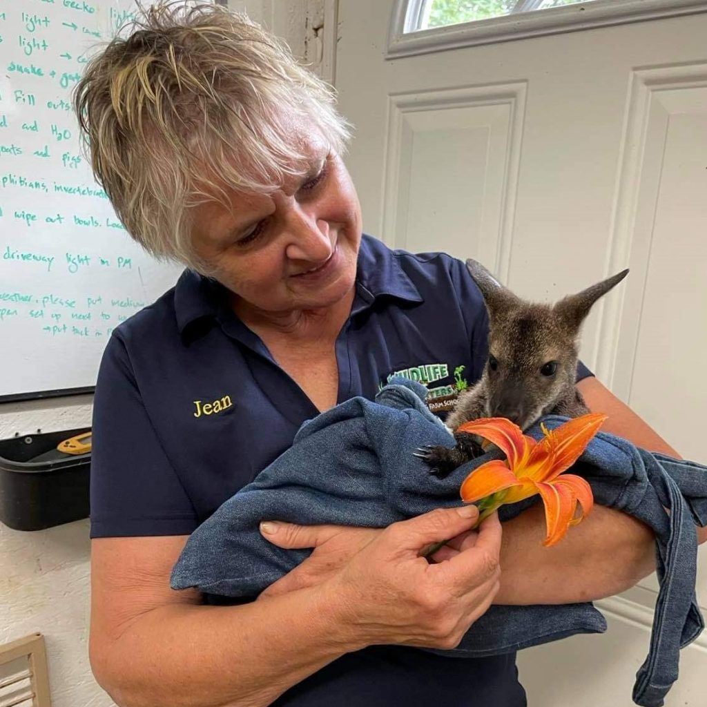Employee Jean holding a kangaroo